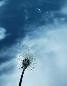 windy2