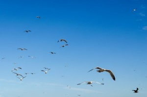 birds-and-blue-sky